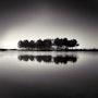 Reflecting Trees. Denis Olivier