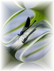 La Libellule. Anne Marie Chetail