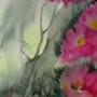 Flores. Marief