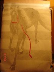 Schritt Pferd Zebra. Marta Arberas