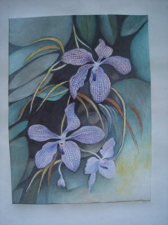 Orchids. Viera Dvorak-Farina Viera Farina
