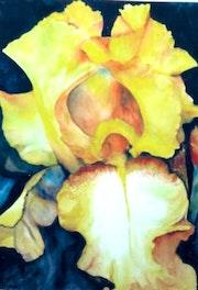 Yellow Bearded Iris Watercolour 2nd Prize Art Award Wondai Australia.