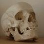 The skull. Philip Le Bosco