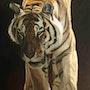 El tigre.