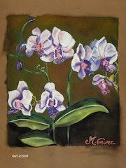 Las orquídeas.
