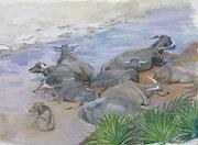 Waterbuffaloes resting on the beach. Nurlisa Kosewahr