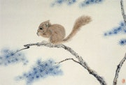 Squirrel. Deanna Gao