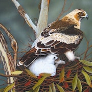 This painting of Eagle & Chick was painted in oils. Brian L Art