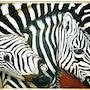 La batalla de las cebras. Ariane Kolosvary-Stierlin