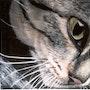 Cat's eye. Ariane Kolosvary-Stierlin