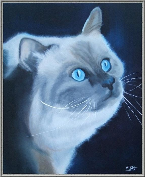 Persian blue. Françoise Dauvergne Tulipe83