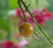 Drop of water.