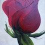 Red Rose. Justin Rautenberg