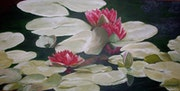 Red water lilies.
