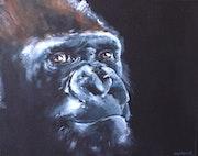 Gorilla 17.