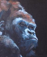Gorilla 18.