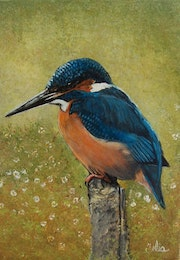 The kingfisher.