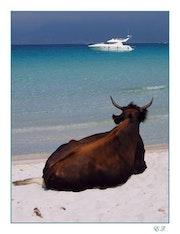 La vaca relojes de los yates, Playa Lodu (Córcega), mayo de 2006.