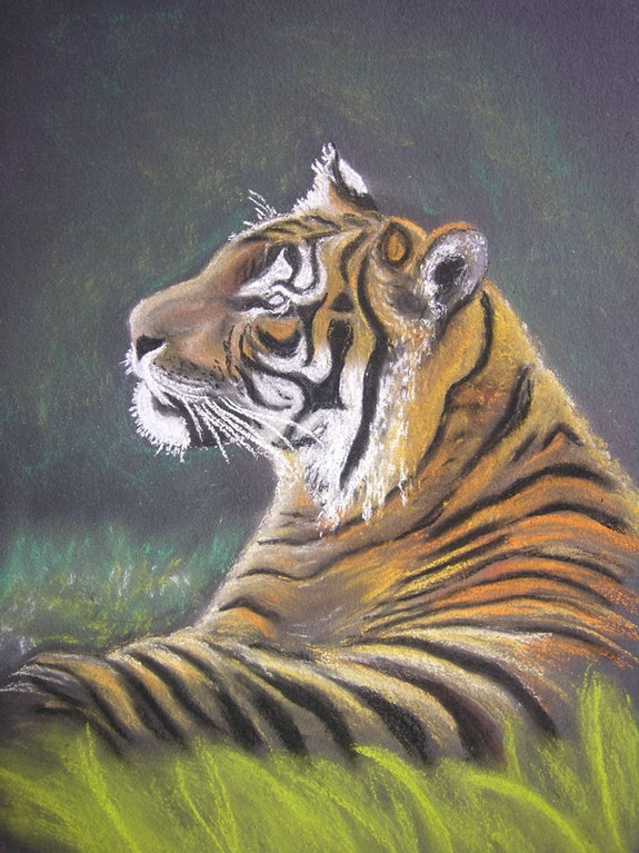 Le tigre. B. Sannier Bernard Sannier