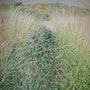 El paso por la hierba de la pradera.. Françoise-Elisabeth Lallemand
