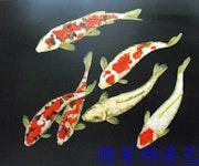 Colorful Fish. Jonny Zheng