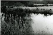 La loire 6 (extrait de la loire novembre 2006). Colette Gourvitch