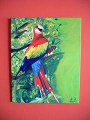 Brazil parrot.
