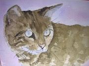 The cat -12/06.