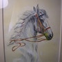 Doma horse-01/07. Bernard Sannier