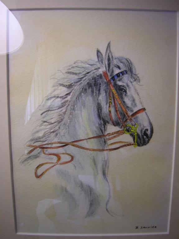 Doma horse-01/07. B. Sannier Bernard Sannier