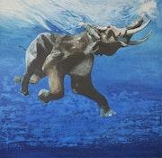 Africa serie 2006. Zvonimir Matich