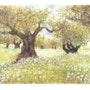 Les oliviers aux fleurs blanches. Douceur Pastelle