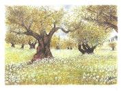 Die Bäume mit weißen Blüten.