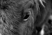 La ternura de caballos. Val Gerbaud