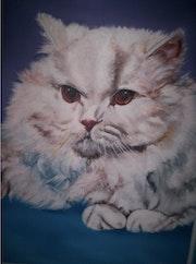 < Maou > chat angora.