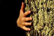 En-Tree.