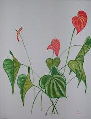 Giant Anthurium. Isabelle Cathelain