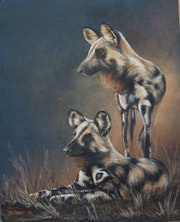 Wild dogs.