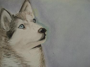Husky Siberiano. Tania Lopez Bayona