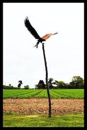 Bird of Prey… Mild steel on wooden post.