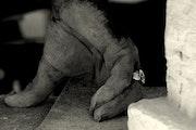 El escultor.