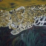 Tenderness el Tigro name given by the inhabitants in Central American jaguar. Simone Monnain