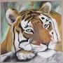 Asian tiger head. Sandra Schneider
