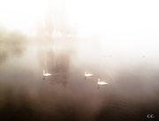 Mists. Christophe Cotichelli