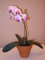 Orchidée en origami.