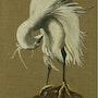 Toilet of the egret. Raphaële