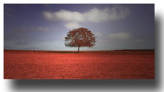 Red Earth. Gilles Bizé Gilles Bizé