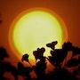 Solar Energy Vortex. Ferri