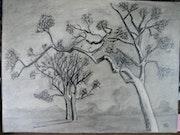 Baum im Winter .