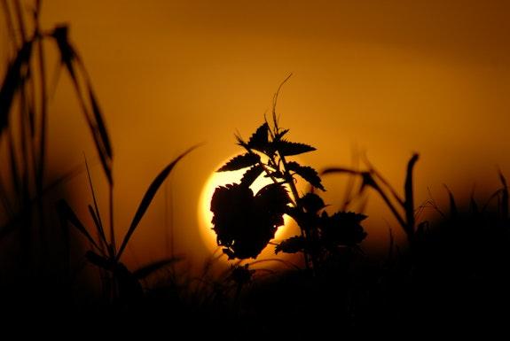 Broken heart back towards the sun. Ferri Ferri